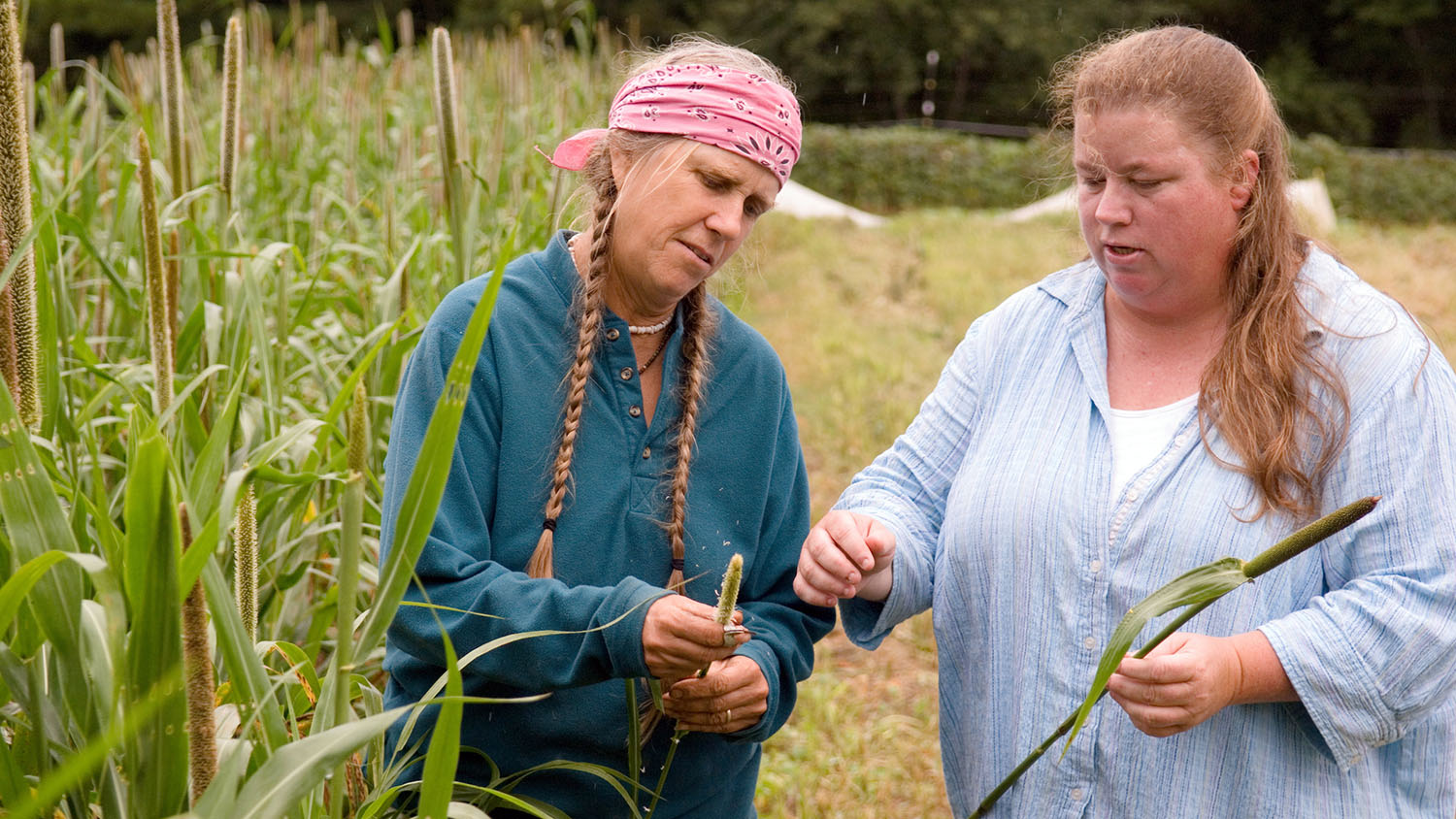 Two farmers consult over a sprig of wheat in a wheat field. One woman wears a pink bandana and has her hair in two long pigtails.