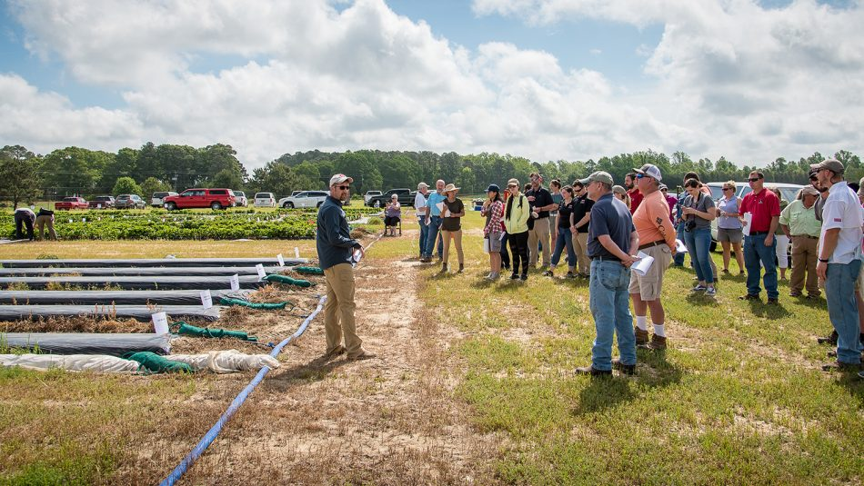 Man addressing a crowd of people looking at strawberry plots.