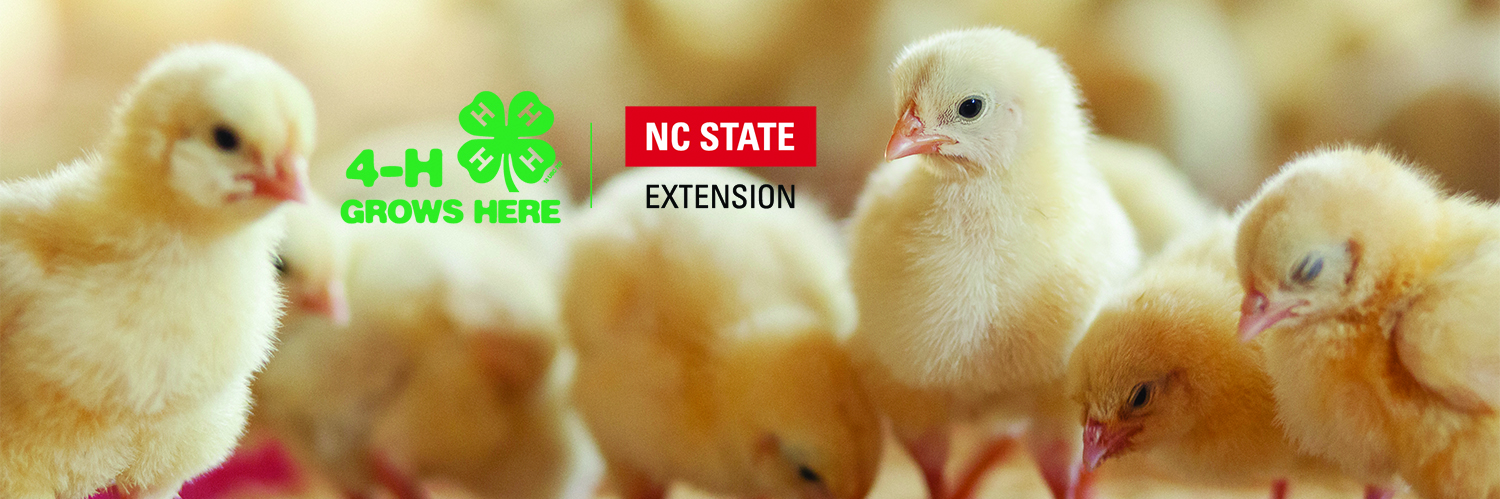 Chicks in a row with 4-h Grows Here and NC State Extension Logo