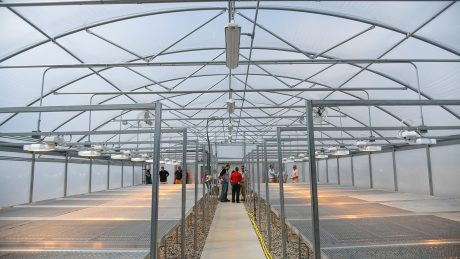 Vaulted ceilings in the new greenhouse