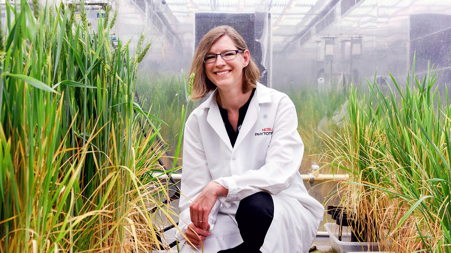 CALS scientist Amy Grunden crouched in front of wheat in a greenhouse