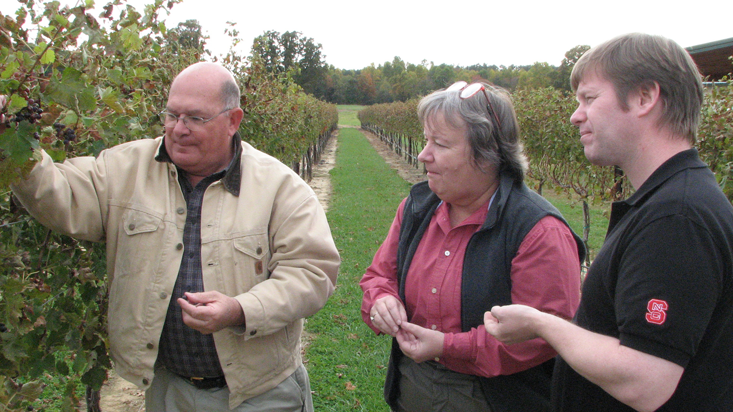 Two men and a woman examining grapes in a vineyard.