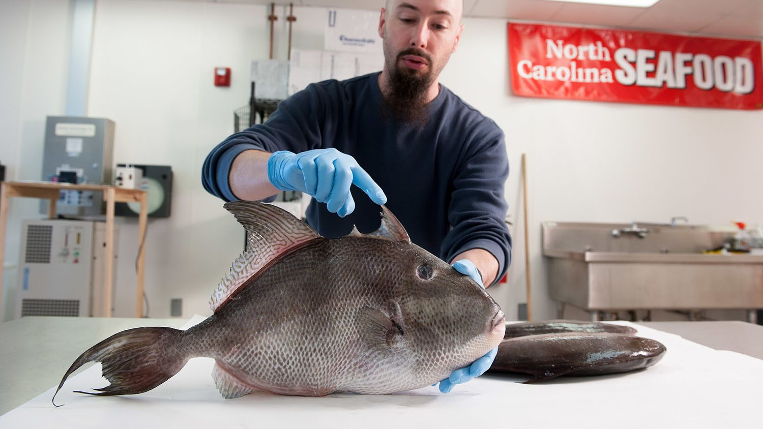 CMAST researcher holds a big, pretty fish.
