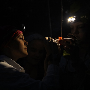 In the dark except for head lamps, students collect ants from sardine baits