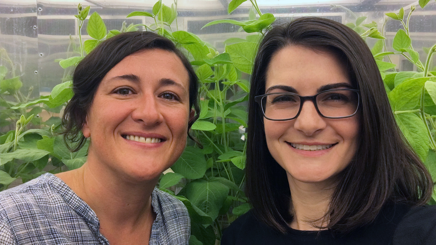 Photo of two scientists in front of soybean plants
