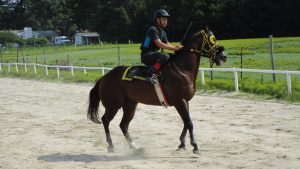 Michael Lynch exercises his quarter horse prior to a short demonstrate race.
