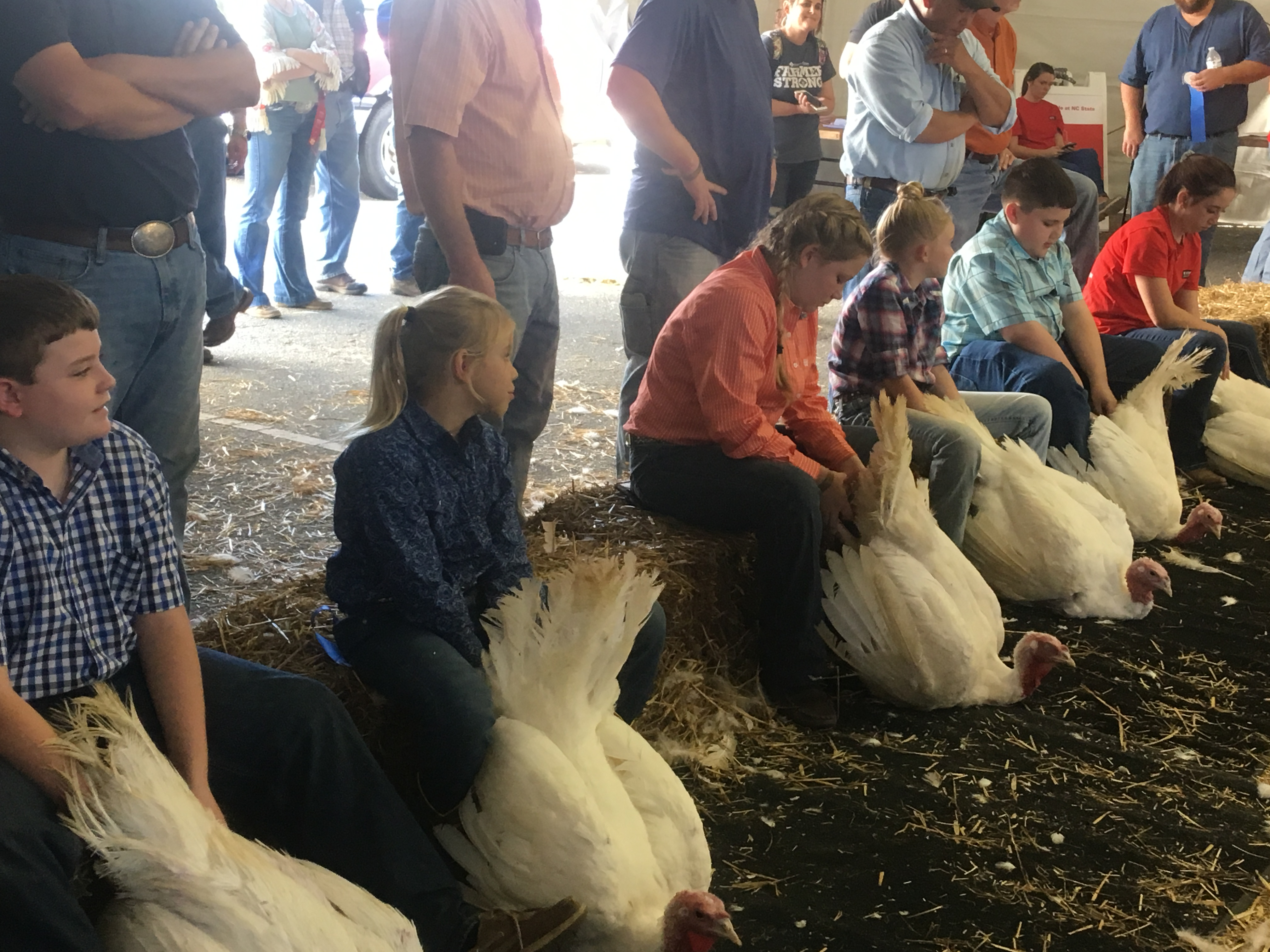 Youth lined up showing turkeys at state fair
