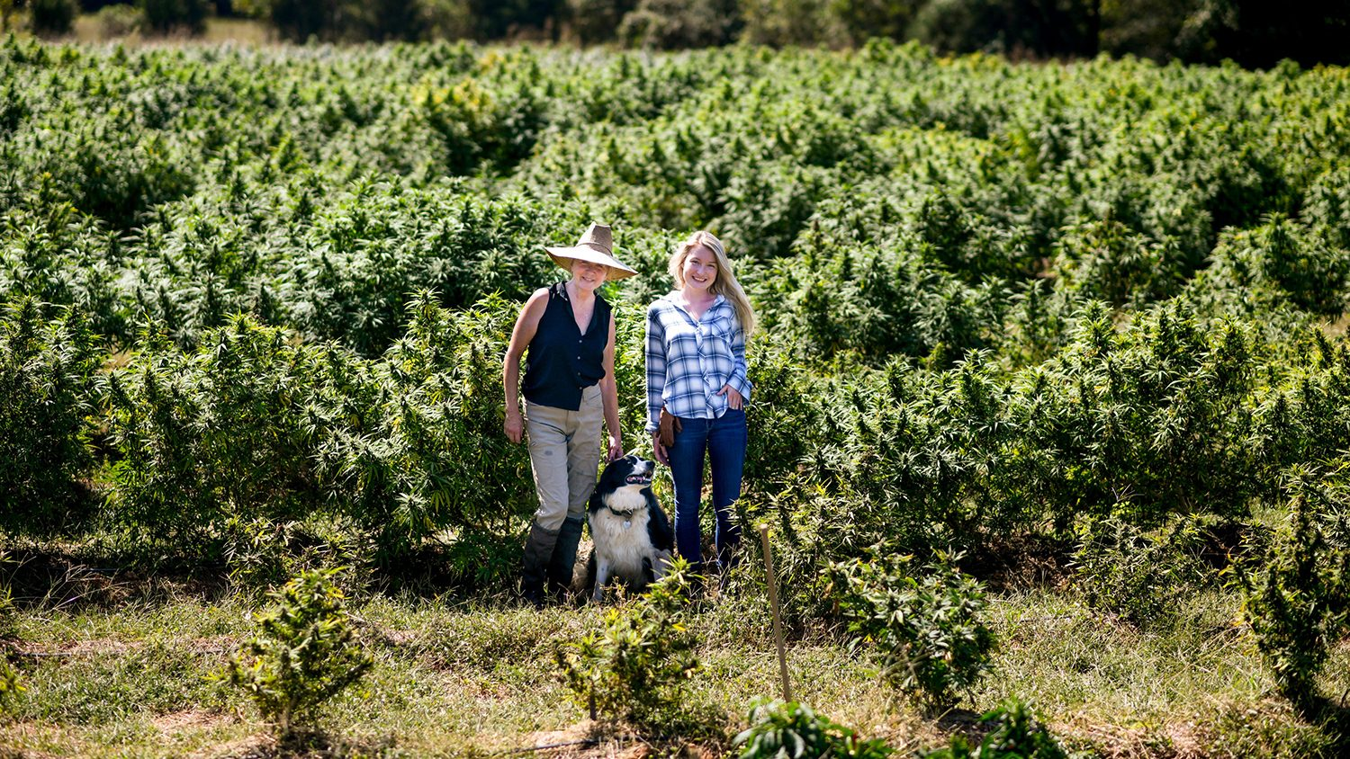 Photo of two women and a dog in a field of hemp