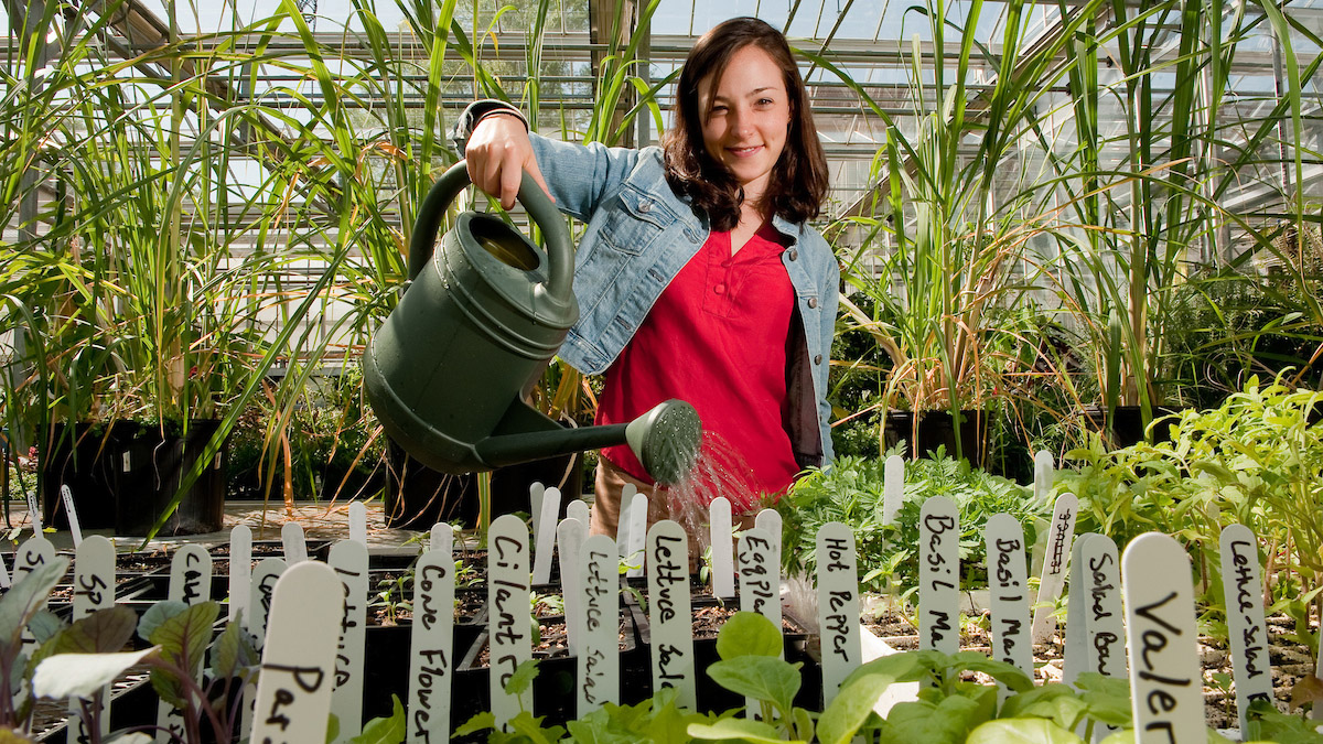 Female student watering a variety of young pants in the greenhouse