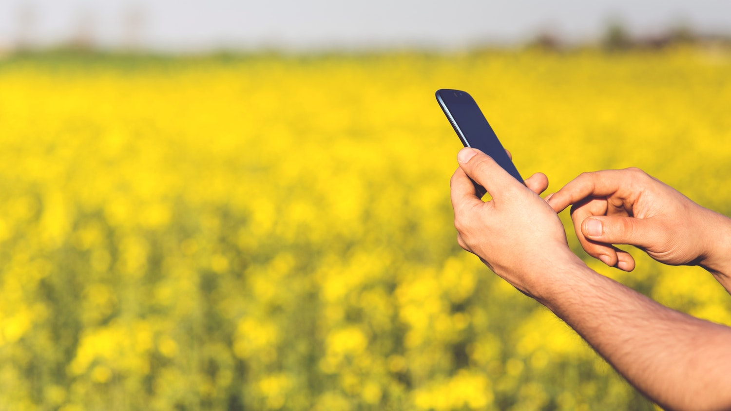 Hands holding a cellphone in a field