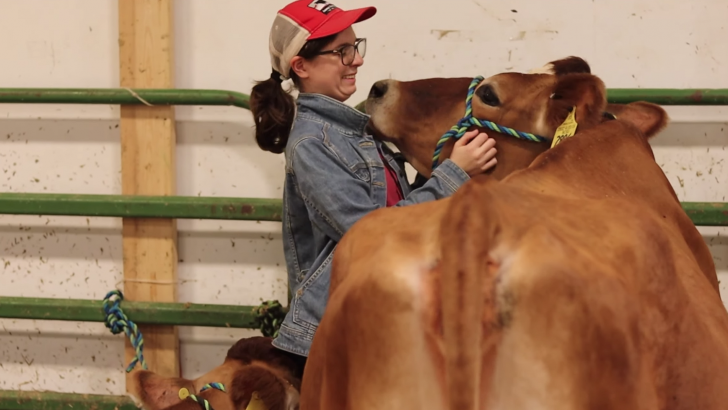 NC State Student Maddie Kuwada and a cow.