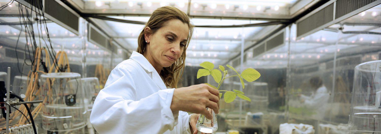 Woman in white lab coat examines plant specimen.