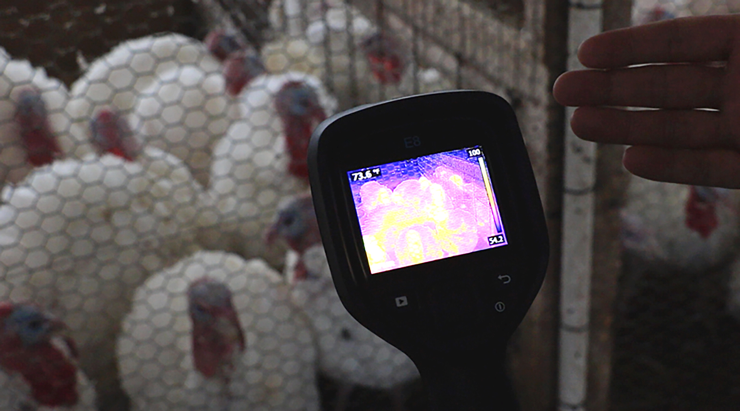 Infrared imaging camera and turkeys