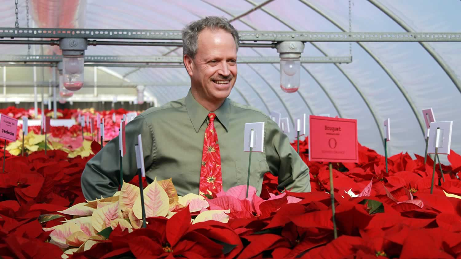 A man standing behind poinsettias in a greenhouse.