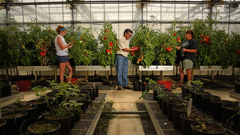 Greenhouse Vegetable Growers Support N.C. Plant Sciences Initiative