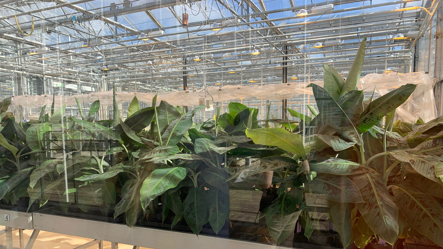 Plants at the Wageningen Greenhouse in the Netherlands