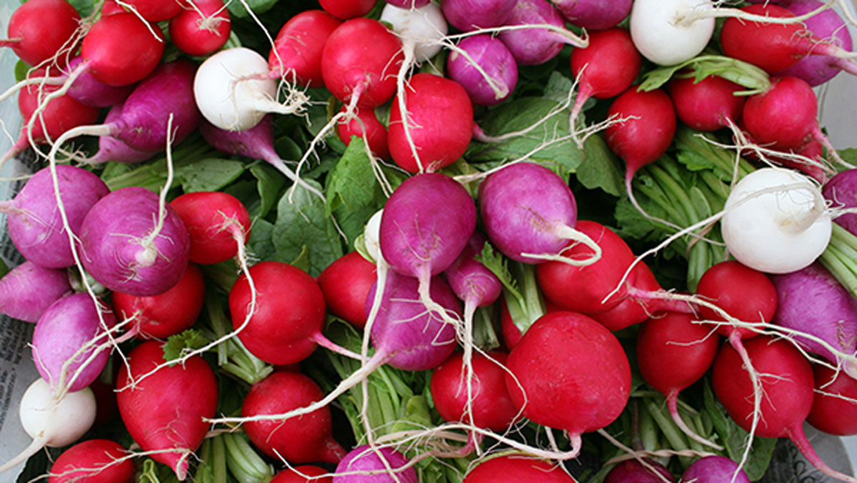 Red, white and purple radishes
