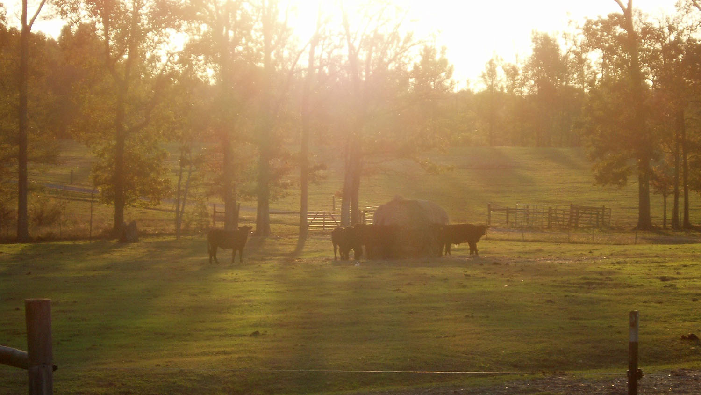 Butner Beef Cattle University Field Laboratory