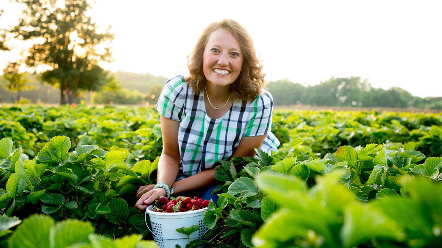 A young woman in a strawberry field with a bucket of strawberries