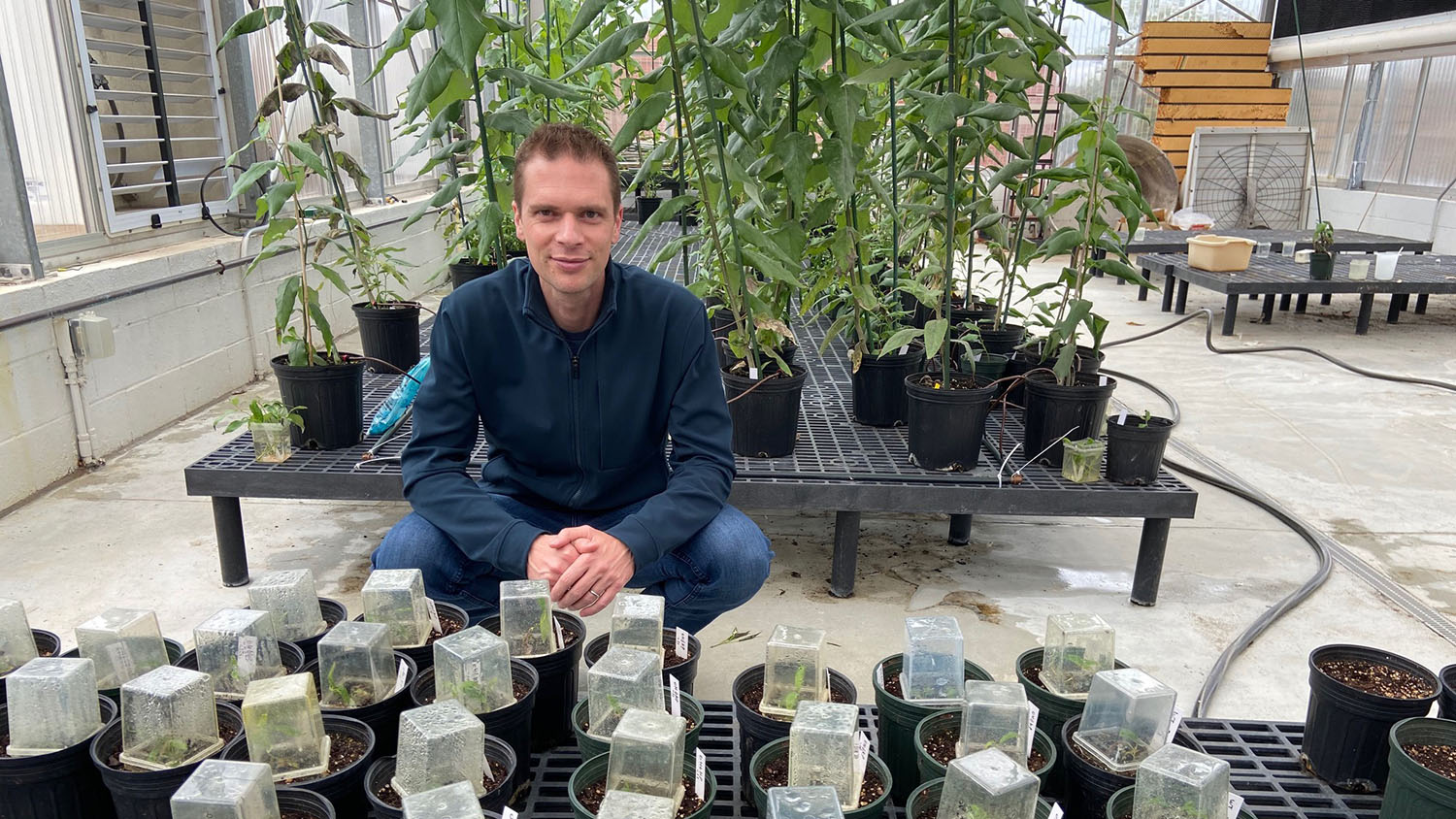 Rodolphe Barrangou, professor and co-founder of TreeCo, with genome edited poplars.
