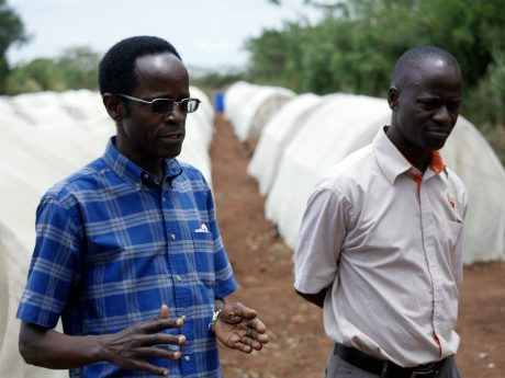 NC State graduate Robert Mwanga (left) on a research farm outside Kampala, Uganda.