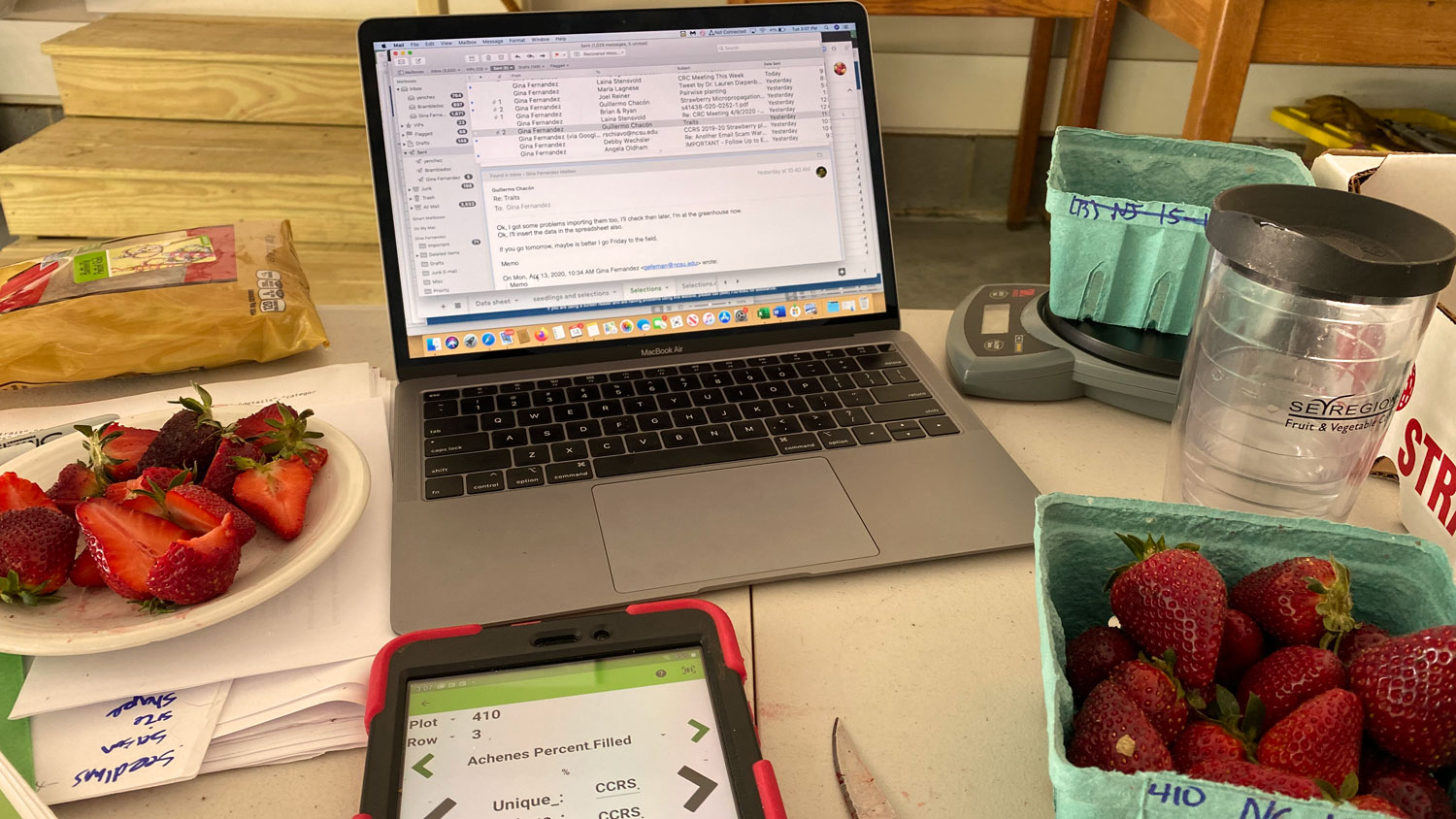 Desk with laptop and strawberry measuring equipment
