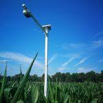 StressCam over a corn field