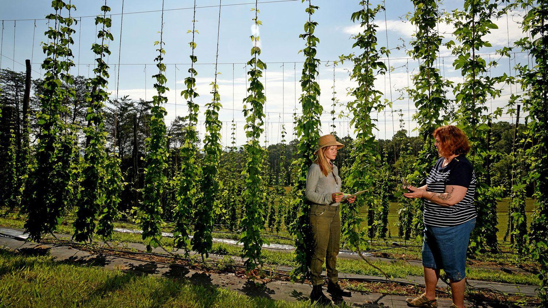 Two women standing in front of hop bines.