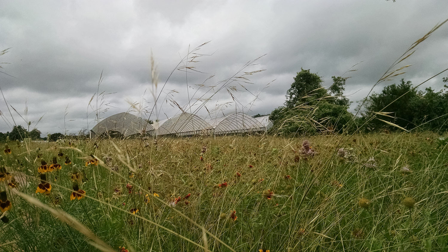 Foreground: grassland with native flowers. Background: three metal and tarp structures with dark clouds overhead.