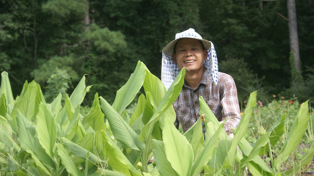 Man behind a row of turmeric plants on a community farm