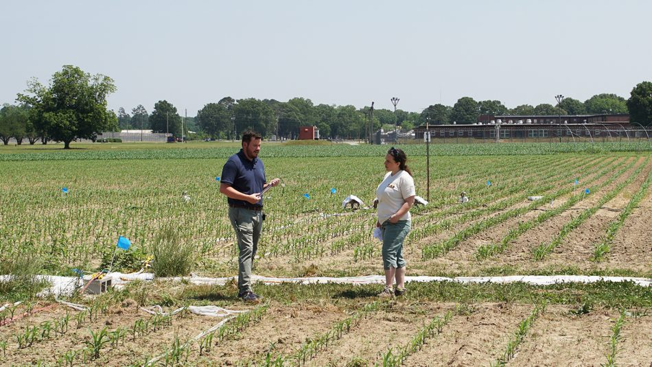 Man and woman talking in a corn field