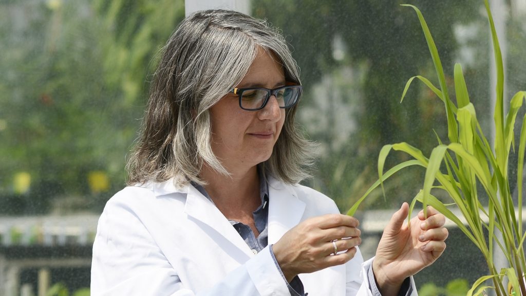 Researcher in a greenhouse