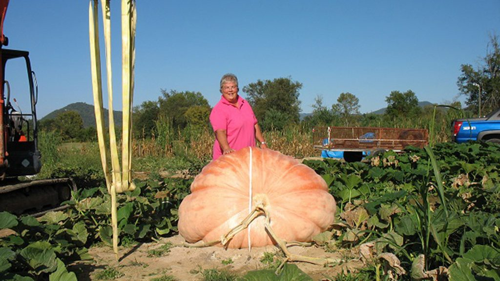 Woman stands behind a nearly 1,000-pound pumpkin