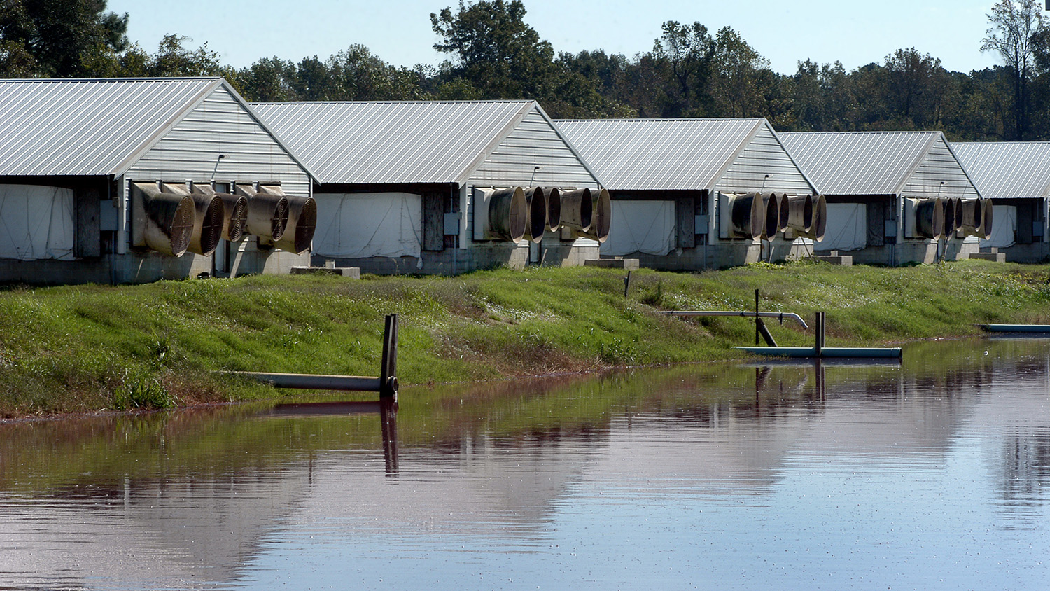 Waste lagoon and hog houses