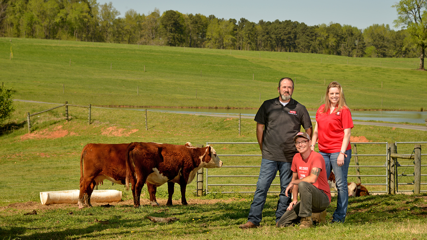 Three military veterans in a farm field with two cows