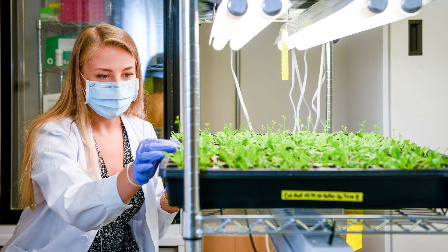 a young woman in a lab looking at seedlings