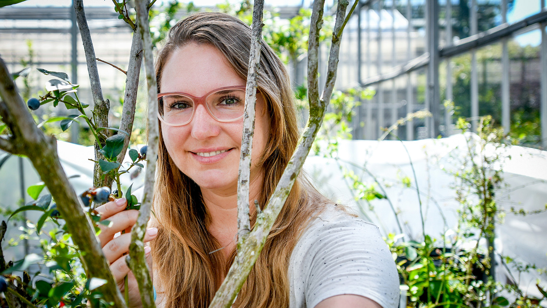 Woman near a blueberry bush in a greenhouse
