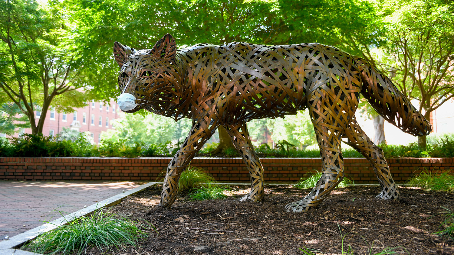 steel wolf on campus with mask on.