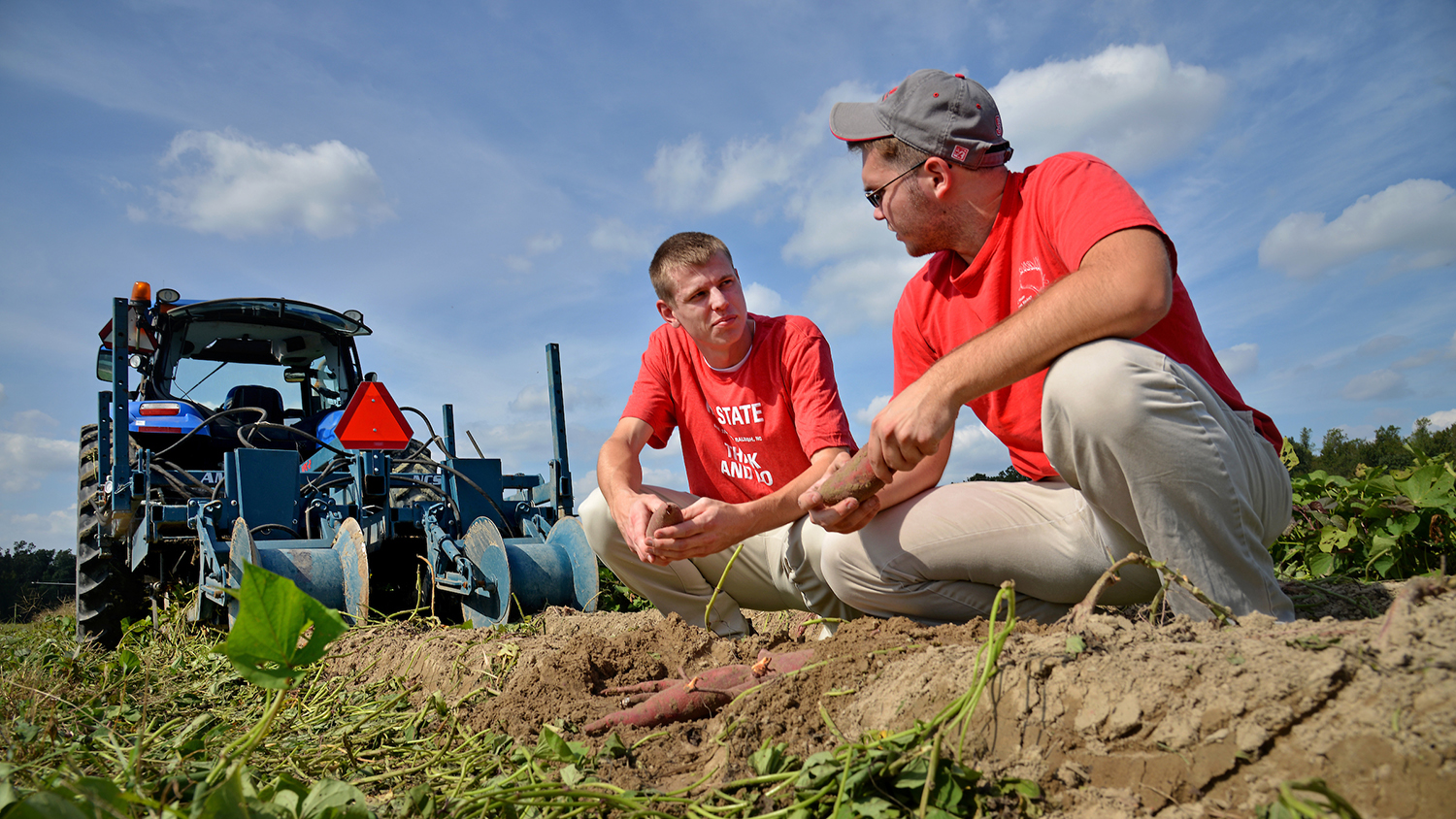 Two NC State students on a sweet potato farm