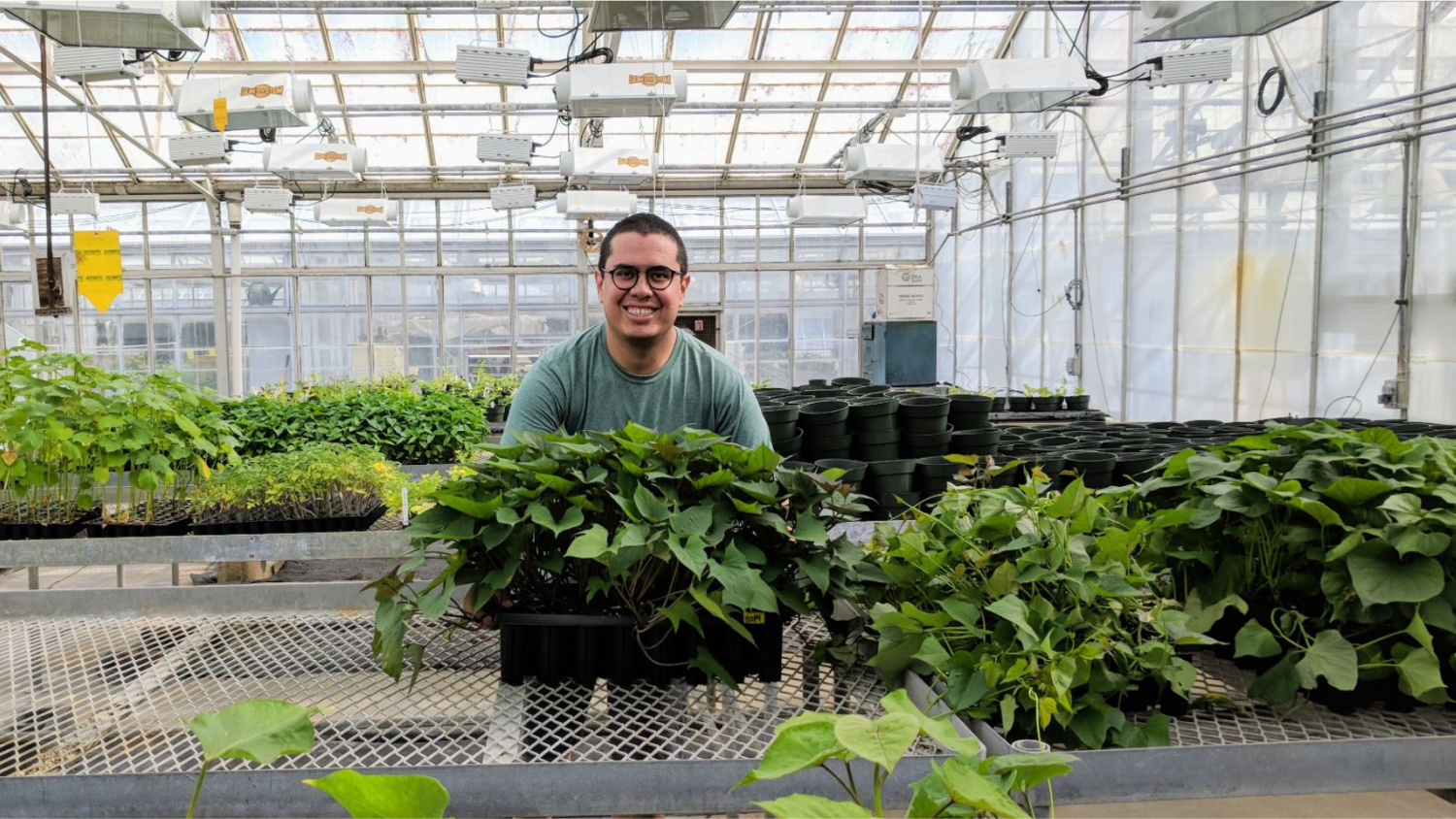 Graduate student in greenhouse with plants.