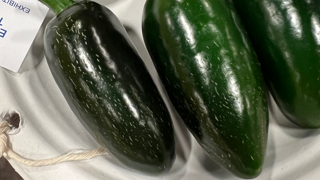 """Two jalapeño peppers with """"checking"""" or striations."""