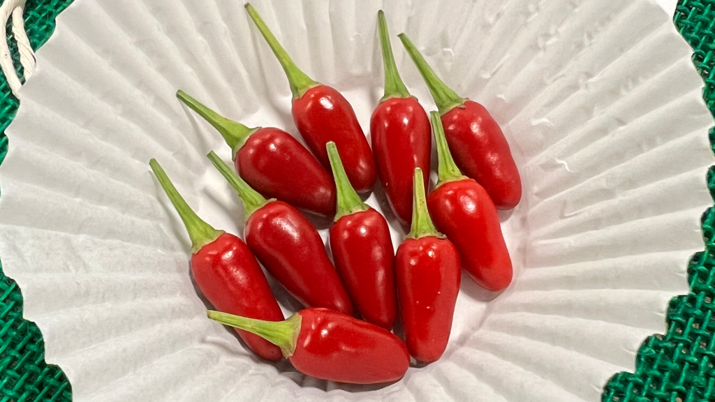Ten tiny little, red hot peppers on display that all look uniform.
