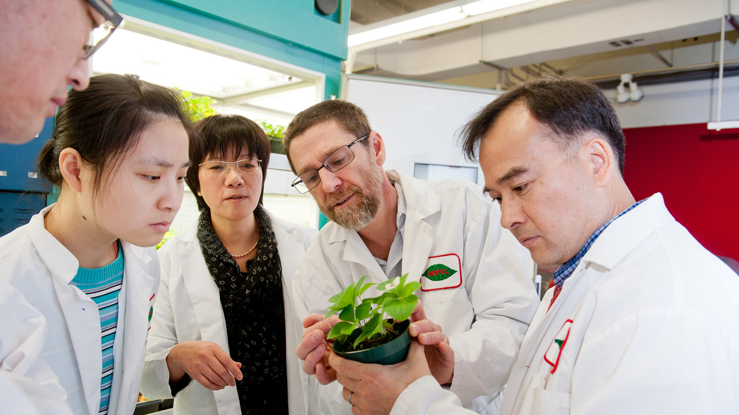 Five NCState College of Agriculture and Life Sciences researchers examine a small dogwood plant in a pot in a laboratory setting.