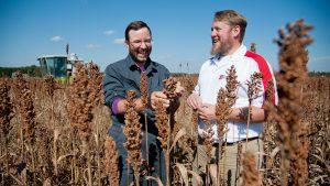 Randy Weisz and Wes Everman in sorghum field