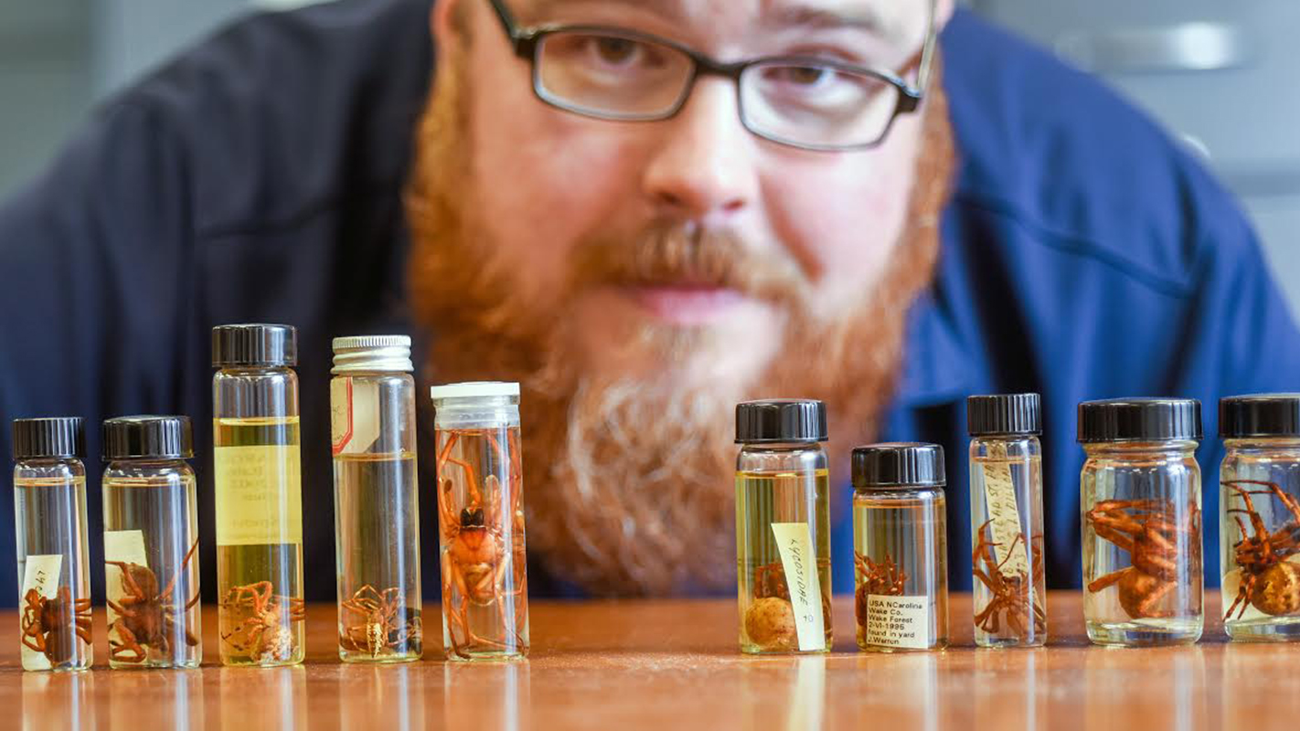 Researcher with spiders and fluid in vials