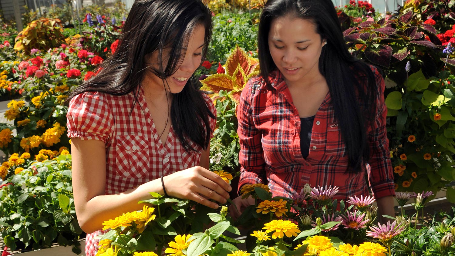 Students examine flowers in greenhouse