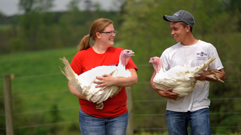 Students carrying turkeys in field