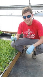 Hunter Mason holding a tobacco seedling in a greenhouse.