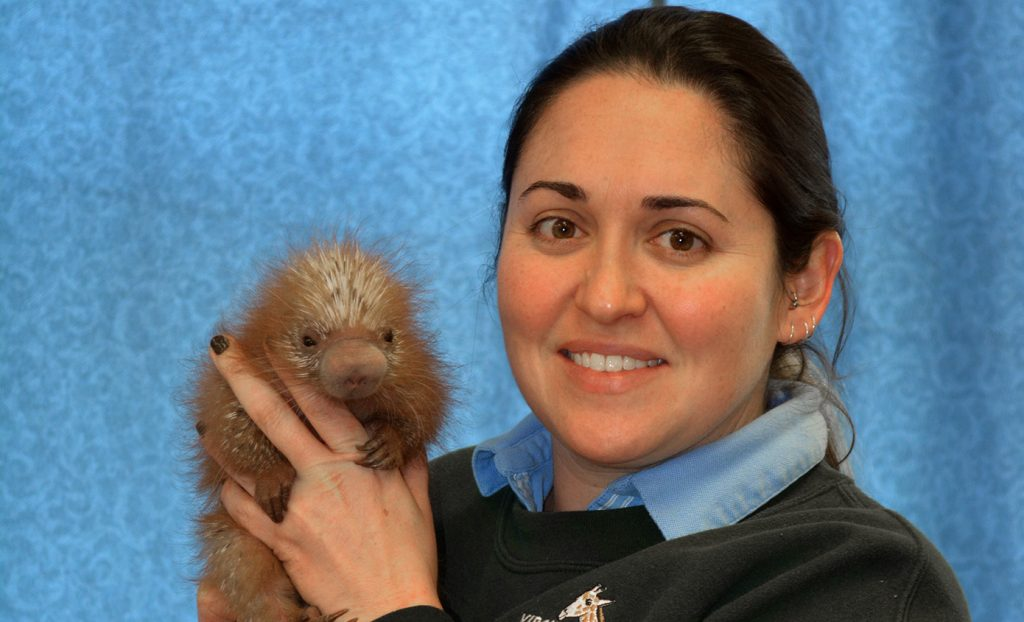 CALS grad Amanda Guthrie Ag Pack Strong Baby Porcupine