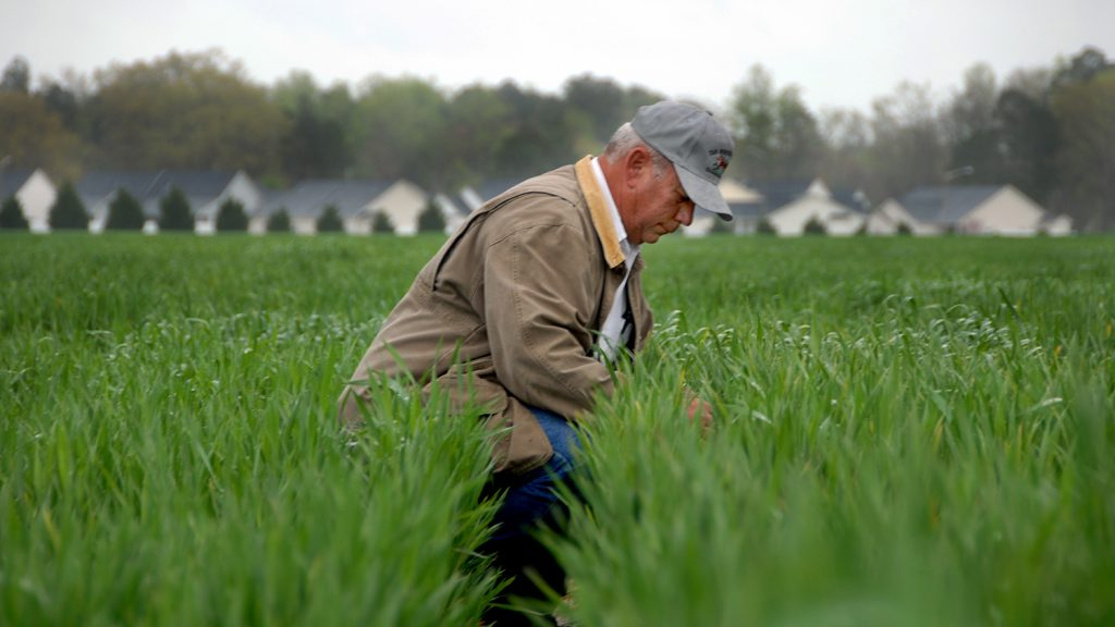 Extension agent looks over research crops planted in Kinston.